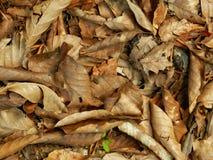Καφετιά φύλλα πτώσης Στοκ φωτογραφία με δικαίωμα ελεύθερης χρήσης