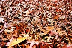 Καφετιά φύλλα Στοκ Εικόνα