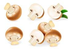 Καφετιά champignon ρεαλιστική διανυσματική απεικόνιση μανιταριών Στοκ φωτογραφίες με δικαίωμα ελεύθερης χρήσης