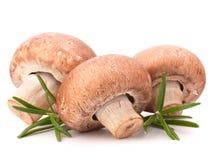 Καφετιά champignon φύλλα μανιταριών και δεντρολιβάνου Στοκ Εικόνα