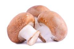 καφετιά champignons Στοκ εικόνες με δικαίωμα ελεύθερης χρήσης