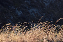 Καφετιές ξηρές χλόες που παρασύρουν στον αέρα στοκ εικόνα με δικαίωμα ελεύθερης χρήσης