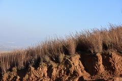 Καφετιές ξηρές χλόες που παρασύρουν στον αέρα στοκ φωτογραφίες με δικαίωμα ελεύθερης χρήσης