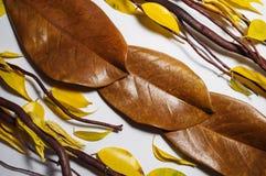Καφετιοί ξηροί κλάδοι, καφετιά φύλλα magnolia και κίτρινο φθινόπωρο leav Στοκ εικόνα με δικαίωμα ελεύθερης χρήσης