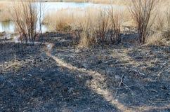 Καψαλισμένα ξηρά χλόη και σκουπίδια στις τέφρες στοκ φωτογραφία με δικαίωμα ελεύθερης χρήσης