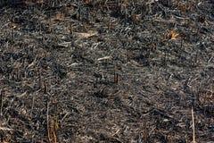 Καψαλισμένη χλόη Στοκ Εικόνες