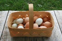 Καλάθια αυγών Στοκ Εικόνες