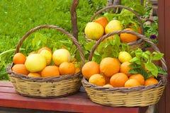 Καλάθια με τα πορτοκάλια Στοκ φωτογραφίες με δικαίωμα ελεύθερης χρήσης