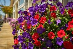 Καλάθια λουλουδιών, Coupeville, Ουάσιγκτον Στοκ φωτογραφία με δικαίωμα ελεύθερης χρήσης