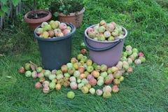 Καλάθια των μήλων Στοκ Φωτογραφία