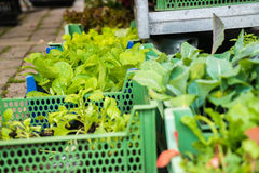 Καλάθια των σποροφύτων στην αγορά αγροτών Στοκ φωτογραφία με δικαίωμα ελεύθερης χρήσης