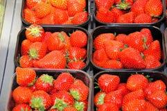 Καλάθια φραουλών Στοκ Εικόνα