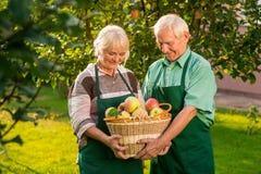 Καλάθι μήλων εκμετάλλευσης ζεύγους Στοκ Εικόνες