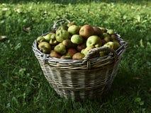 καλάθι μήλων οργανικό Στοκ Εικόνες