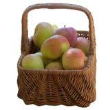 καλάθι μήλων φρέσκο Στοκ Εικόνα