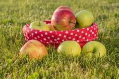 καλάθι μήλων ώριμο Στοκ εικόνες με δικαίωμα ελεύθερης χρήσης