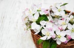 Καλάθι με τα άνθη της Apple Στοκ Εικόνα