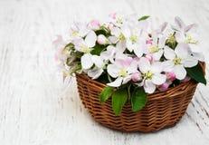 Καλάθι με τα άνθη της Apple Στοκ Εικόνες