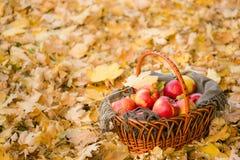 Καλάθι με τα μήλα στα φύλλα φθινοπώρου στο δάσος Στοκ φωτογραφία με δικαίωμα ελεύθερης χρήσης