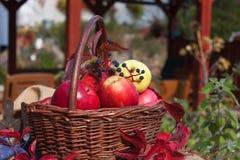 Καλάθι με τα μήλα στον κήπο Φρούτα συγκομιδών φθινοπώρου Σύνολο καλαθιών της βιταμίνης και των φρούτων συλλογή μήλων Στοκ φωτογραφία με δικαίωμα ελεύθερης χρήσης