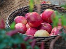 Καλάθι με τα μήλα Στοκ φωτογραφίες με δικαίωμα ελεύθερης χρήσης