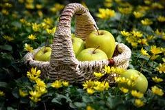 Καλάθι με τα πράσινα μήλα Στοκ εικόνες με δικαίωμα ελεύθερης χρήσης