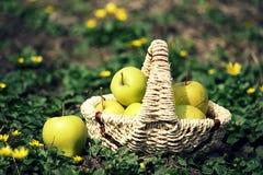 Καλάθι με τα πράσινα μήλα Στοκ φωτογραφία με δικαίωμα ελεύθερης χρήσης