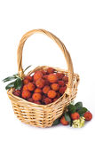 Καλάθι με τα φρούτα unedo arbutus πέρα από το λευκό Στοκ Εικόνες