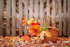 Καλάθι με τα φύλλα φθινοπώρου Στοκ Εικόνες