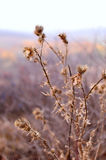 Καλάθι με τα φύλλα Στοκ φωτογραφία με δικαίωμα ελεύθερης χρήσης
