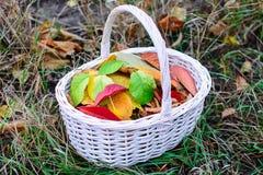 Καλάθι με τα φύλλα Στοκ Εικόνες