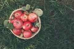 Καλάθι με τη συγκομιδή μήλων στη χλόη στον κήπο, τοπ άποψη Στοκ φωτογραφία με δικαίωμα ελεύθερης χρήσης