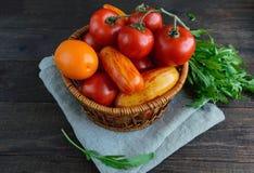 Καλάθι με τις ντομάτες των διαφορετικών ποικιλιών και sheaf arugula στο σκοτεινό ξύλινο υπόβαθρο Στοκ Φωτογραφίες