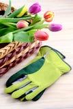 Καλάθι με τις τουλίπες δεσμών και τα γάντια κηπουρικής Στοκ Εικόνες