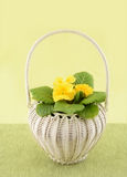 Καλάθι λουλουδιών Στοκ Εικόνες