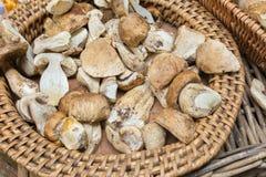 Καλάθι της άγριας περικοπής μανιταριών και προετοιμασμένος στοκ φωτογραφία