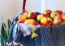 Καλάθι των μήλων Στοκ εικόνα με δικαίωμα ελεύθερης χρήσης