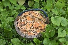 Καλάθι των μανιταριών στο χορτοτάπητα Στοκ φωτογραφία με δικαίωμα ελεύθερης χρήσης