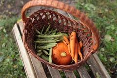 Καλάθι των οργανικών λαχανικών κήπων Στοκ φωτογραφία με δικαίωμα ελεύθερης χρήσης