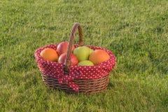 Καλάθι των ώριμων μήλων και των πορτοκαλιών Στοκ Εικόνα