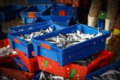 Καλάθι ψαριών Στοκ Φωτογραφία