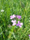 Καλά λουλούδια Στοκ φωτογραφία με δικαίωμα ελεύθερης χρήσης
