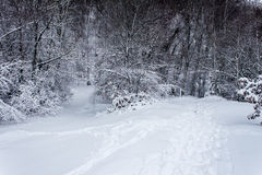 Καλά ταξιδεμμένες πορείες στο χιόνι Στοκ Εικόνες