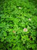 καλά χλόη & φύλλο λουλουδιών Στοκ Εικόνες