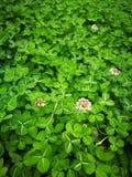 καλά χλόη & φύλλο λουλουδιών Στοκ Φωτογραφίες