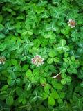 καλά χλόη & φύλλο λουλουδιών Στοκ φωτογραφία με δικαίωμα ελεύθερης χρήσης