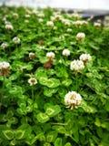 καλές φύλλο & χλόη λουλουδιών Στοκ Φωτογραφία