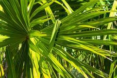 καλή πράσινη τροπική ταπετσαρία φυτών φύλλων Στοκ Φωτογραφία