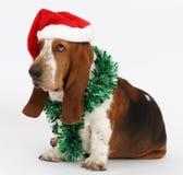Καλή χρονιά, συνεδρίαση κυνηγόσκυλων μπασέ Χριστουγέννων, που απομονώνεται Στοκ φωτογραφία με δικαίωμα ελεύθερης χρήσης