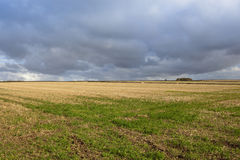 Καλαμιές και ουρανός αχύρου Στοκ φωτογραφία με δικαίωμα ελεύθερης χρήσης